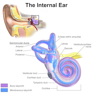 vertigo is caused by pathology of the inner ear or brain