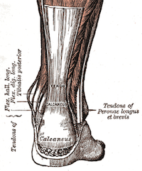 Your physiotherapist or osteopath can treat your achilles tendinopathy