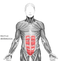 The abdominal muscles are responsible for flexion of the trunk and can become chronically tight in people who sit too much