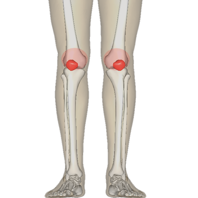 Anatomy of the knee for patella tracking disorder